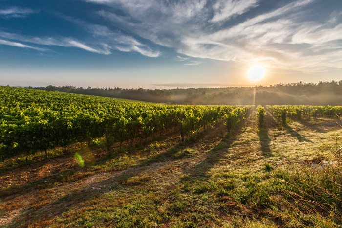 Wine: The Best Grapes Grow in the Rockiest Soil